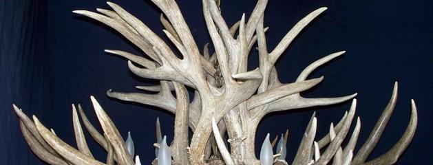The King Mule Deer Chandelier