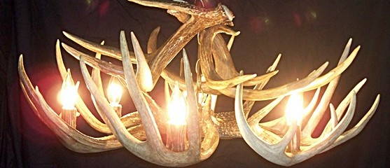 Whitetail Deer Chandelier