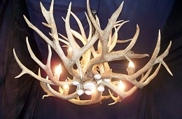 Drop-tine Mule Deer Chandelier